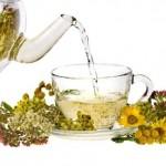 лекарственные травы, целебные свойства
