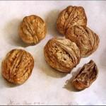 орех, полезные свойства