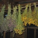 лечебные травы, полезные свойства