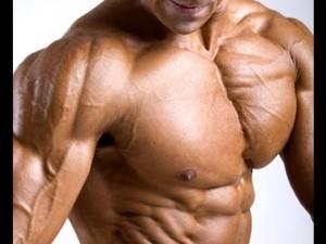мышцы, организм