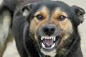 бешенство, укусы животных, собака